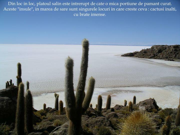"""Din loc in loc, platoul salin este intrerupt de cate o mica portiune de pamant curat. Aceste """"insule"""", in marea de sare sunt singurele locuri in care creste ceva : cactusi inalti, cu brate imense."""