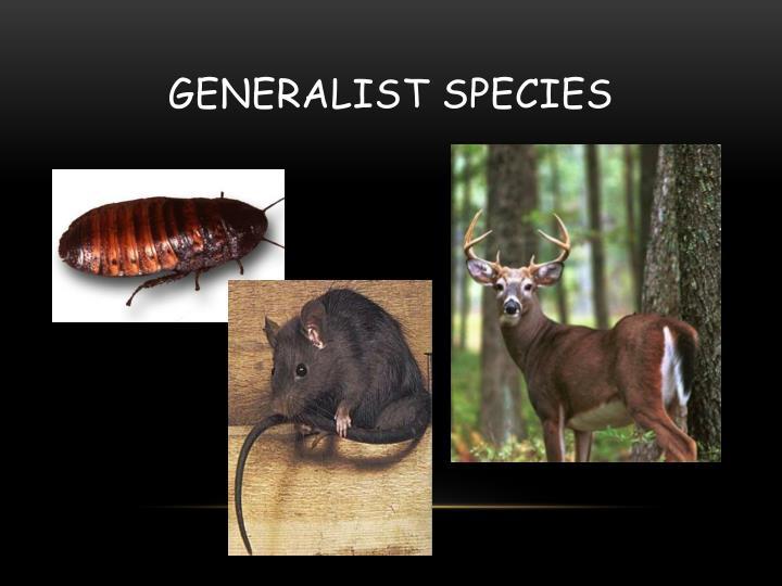 Generalist Species