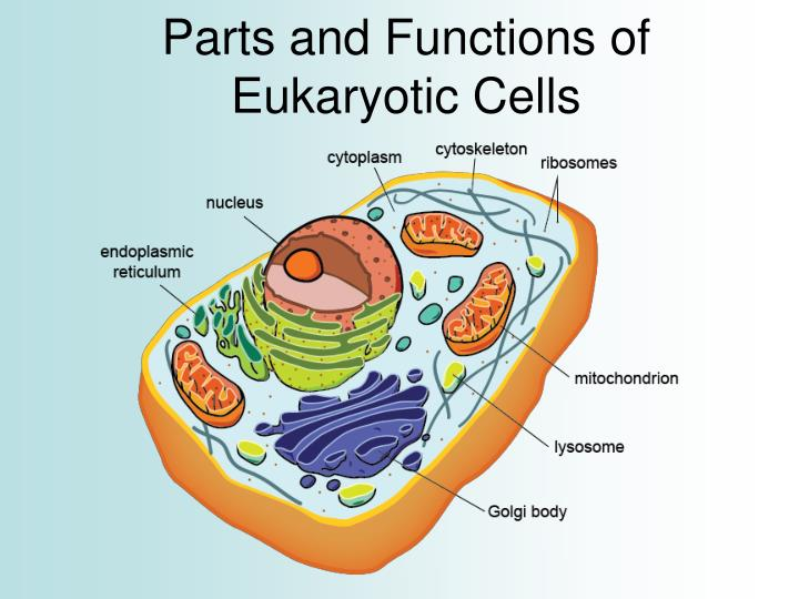 cell parts and functions pdf