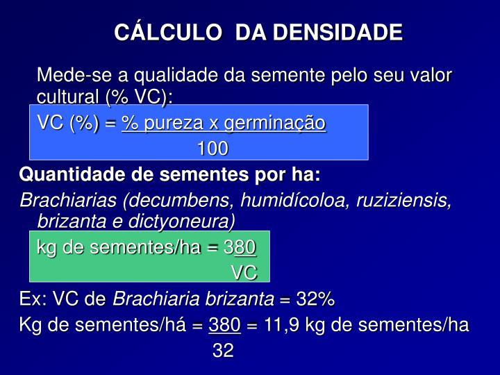 CÁLCULO  DA DENSIDADE