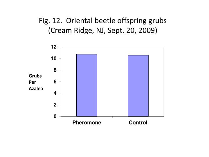 Fig 12 oriental beetle offspring grubs cream ridge nj sept 20 2009