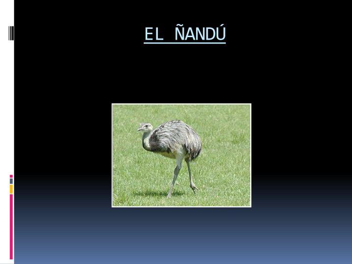 EL ÑANDÚ