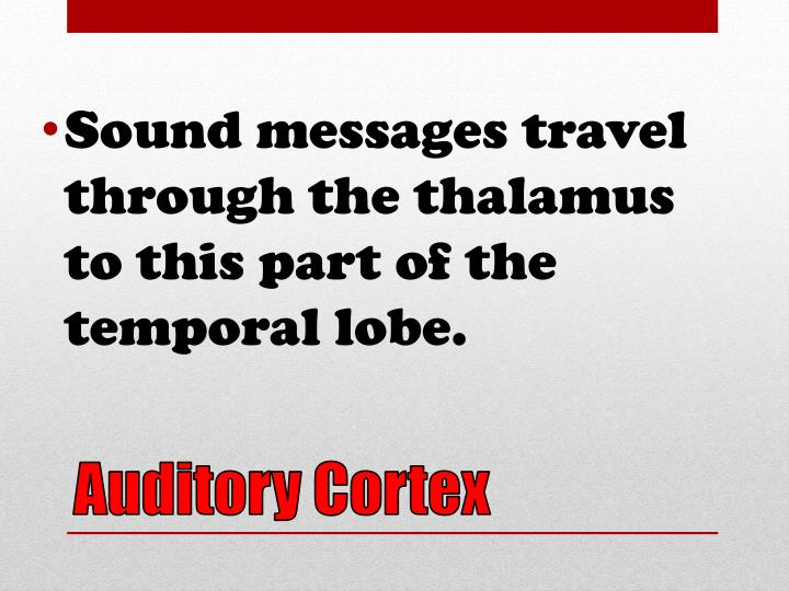 Sound messages travel through the thalamus to this part of the temporal lobe.