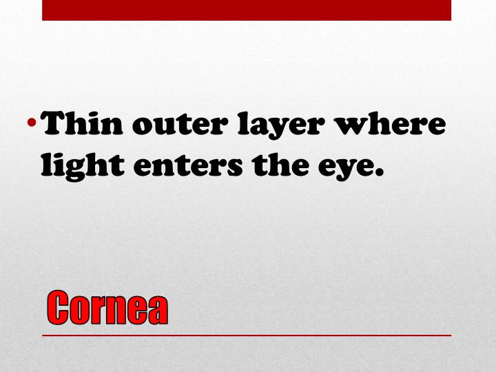 Thin outer layer where light enters the eye.