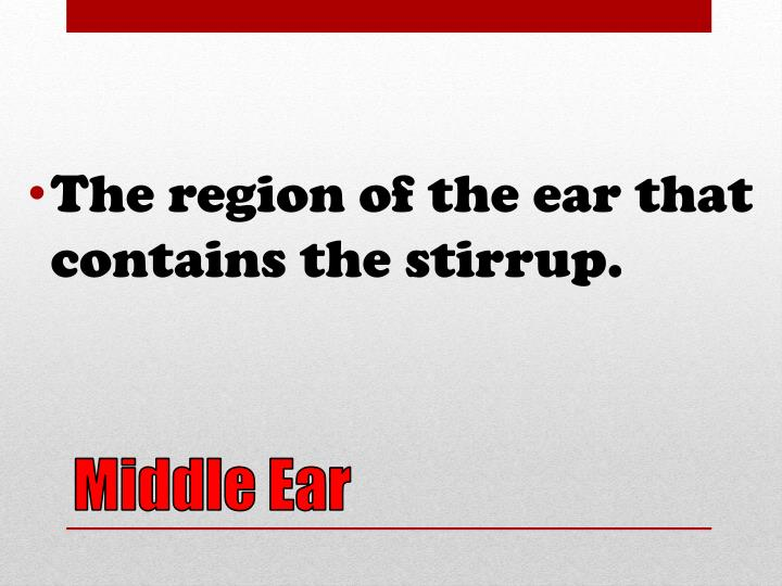 The region of the ear that contains the stirrup.