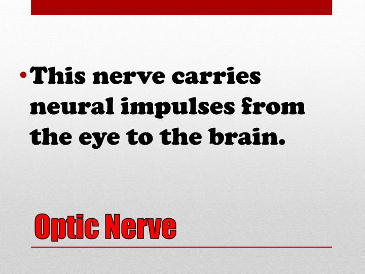 This nerve carries neural impulses from the eye to the brain.