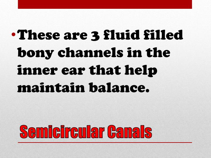 These are 3 fluid filled bony channels in the inner ear that help maintain balance.