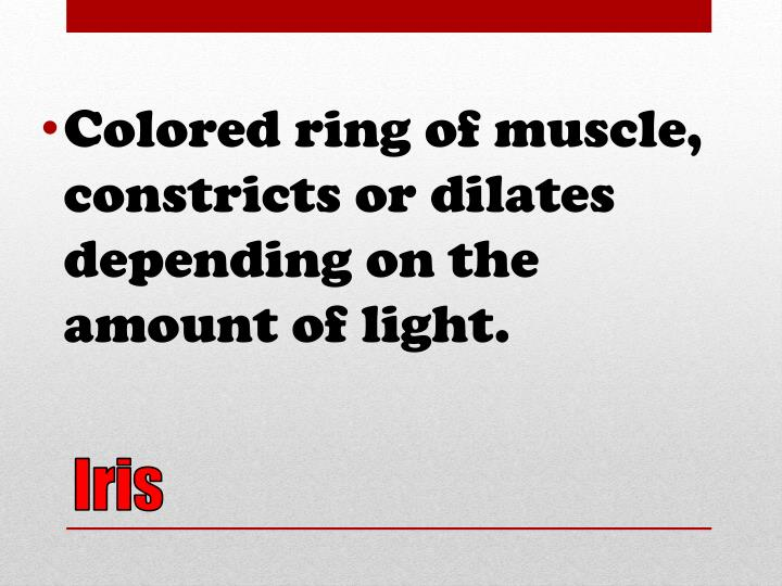 Colored ring of muscle, constricts or dilates depending on the amount of light.
