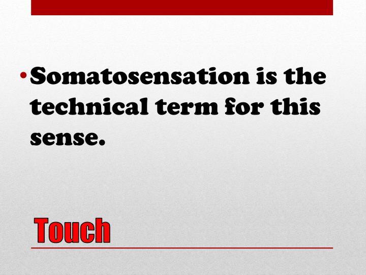 Somatosensation