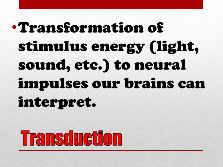 Transformation of stimulus energy (light, sound, etc.) to neural impulses our brains can interpret.