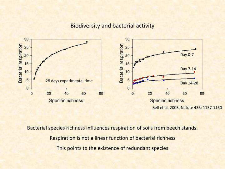 Biodiversity and bacterial activity