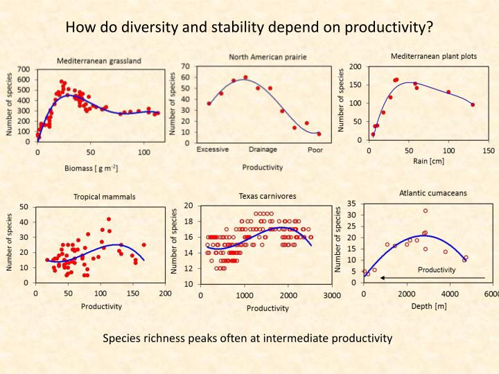 How do diversity and stability depend on productivity?
