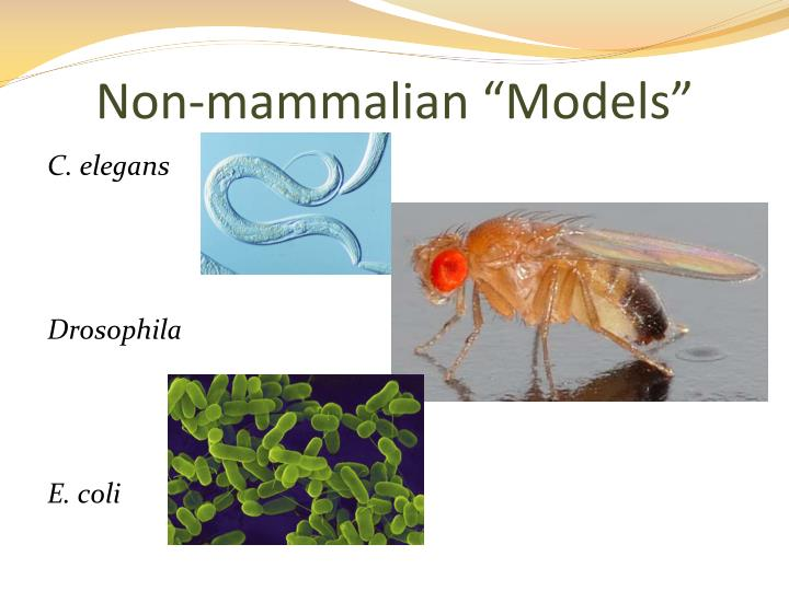 "Non-mammalian ""Models"""