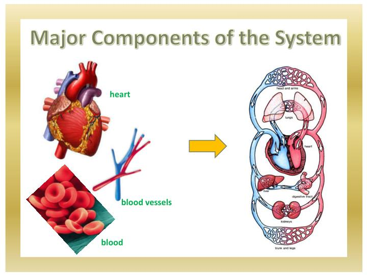 Major Components of the System