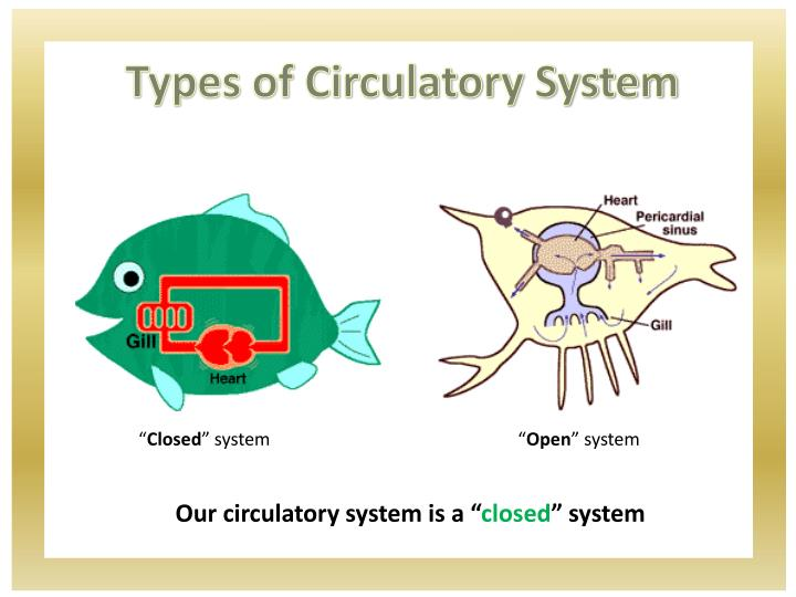 Types of Circulatory System