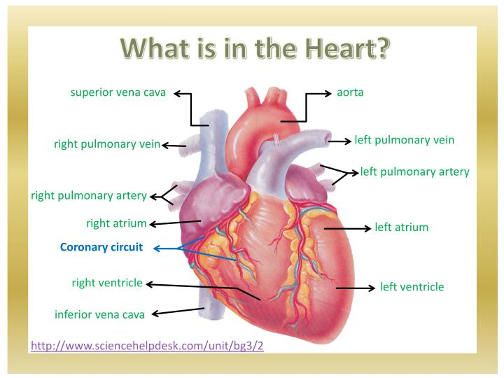 What is in the Heart?