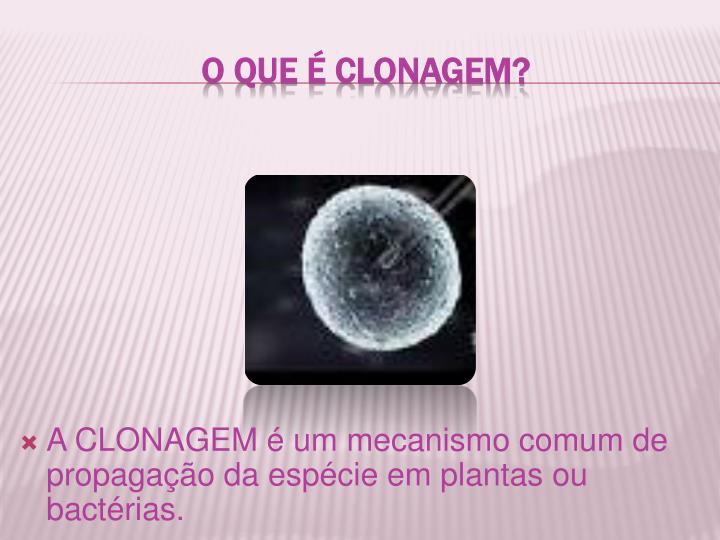 O que é clonagem?