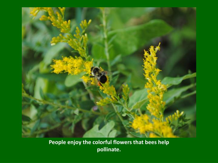 People enjoy the colorful flowers that bees help pollinate.