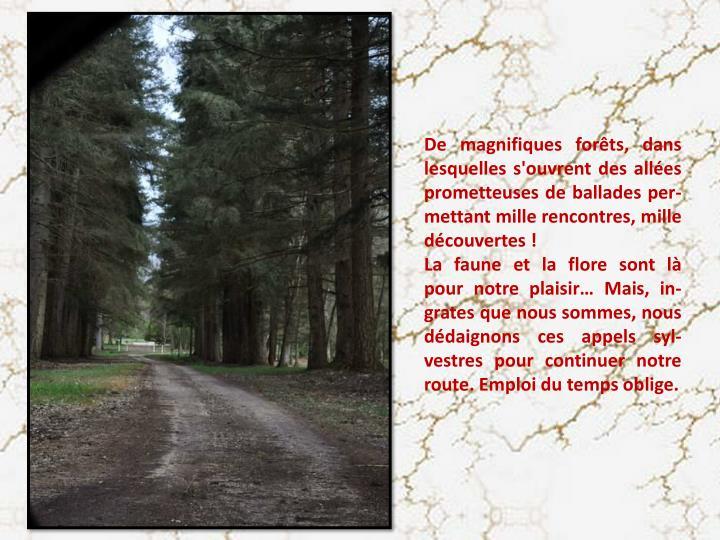 De magnifiques forêts, dans lesquelles s'ouvrent des allées prometteuses de ballades per-mettant mille rencontres, mille découvertes !