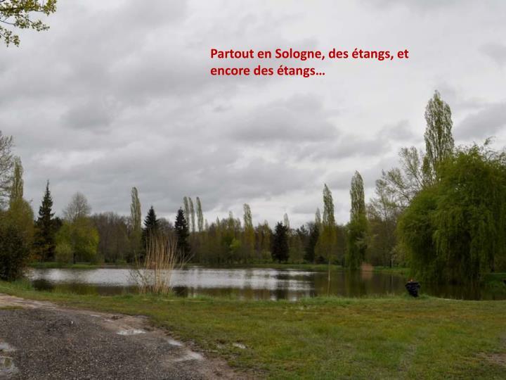 Partout en Sologne, des étangs, et encore des étangs…