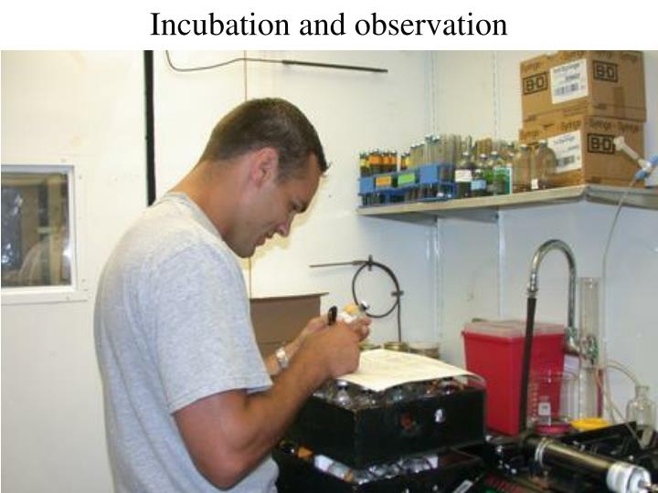 Incubation and observation