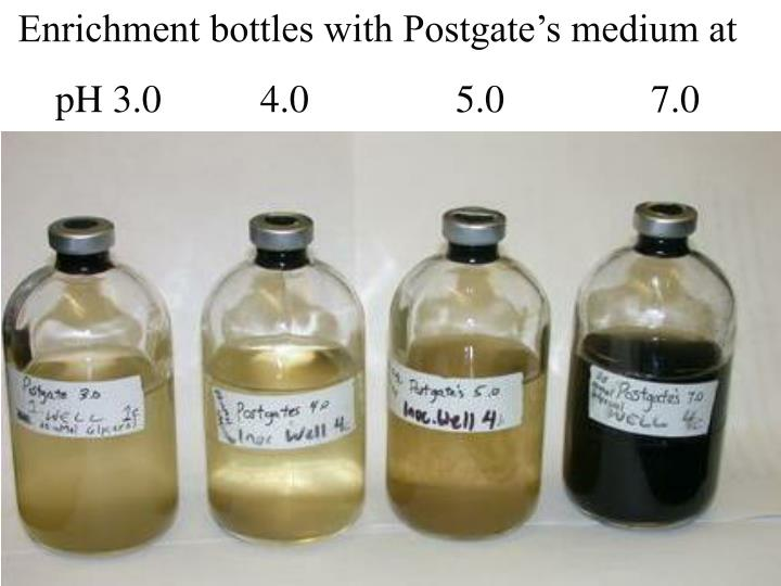 Enrichment bottles with Postgate's medium at