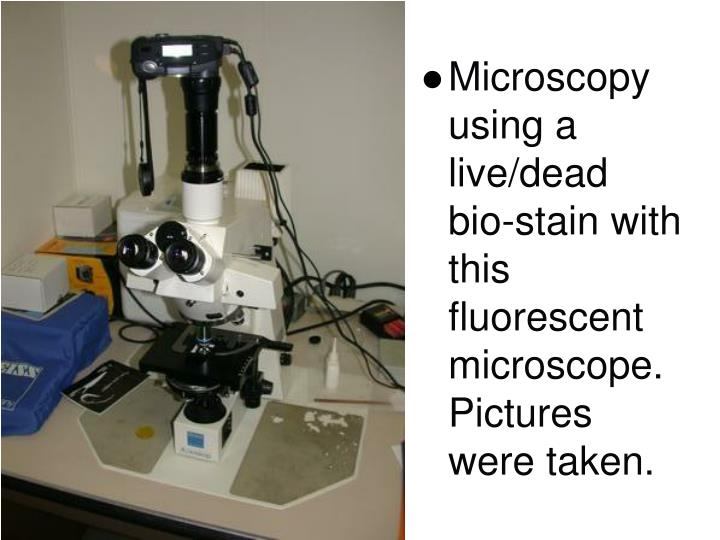 Microscopy using a live/dead bio-stain with this fluorescent microscope. Pictures were taken.