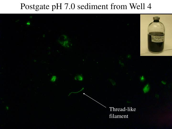 Postgate pH 7.0 sediment from Well 4