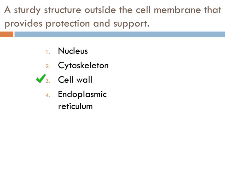 A sturdy structure outside the cell membrane that provides protection and support.