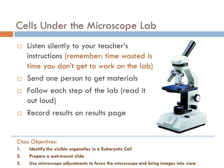 Cells Under the Microscope Lab