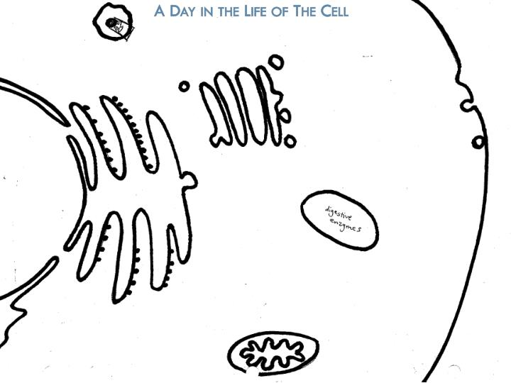 A Day in the Life of The Cell