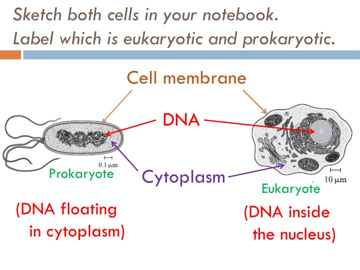Sketch both cells in your notebook.