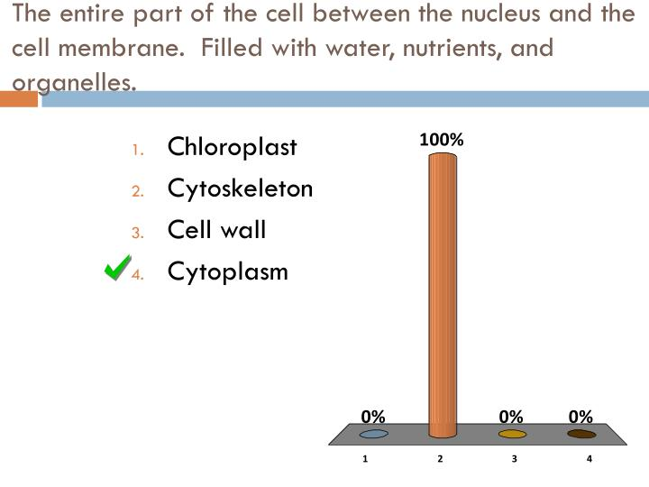 The entire part of the cell between the nucleus and the cell membrane.  Filled with water, nutrients, and organelles.