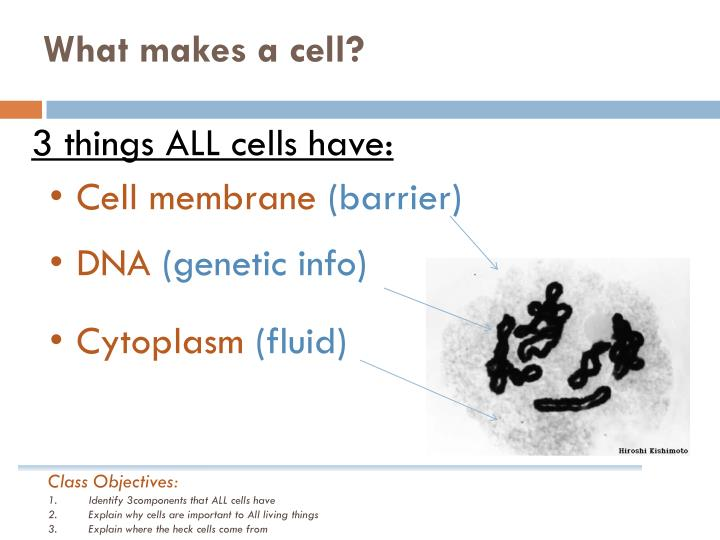 What makes a cell?