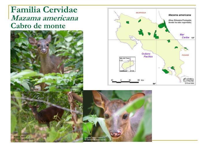 Familia Cervidae