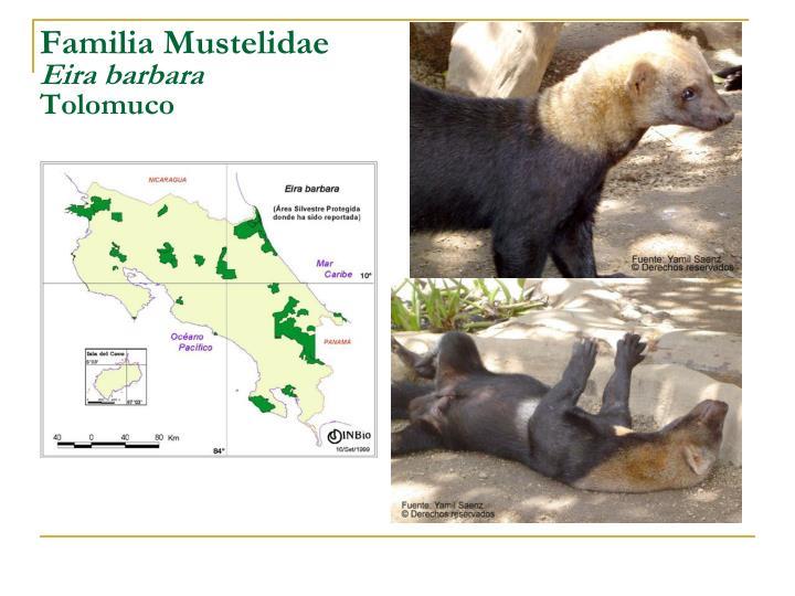Familia Mustelidae