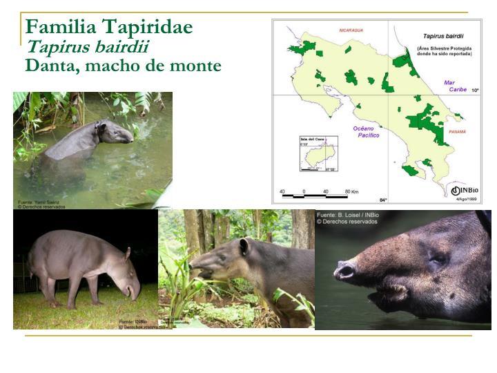 Familia Tapiridae