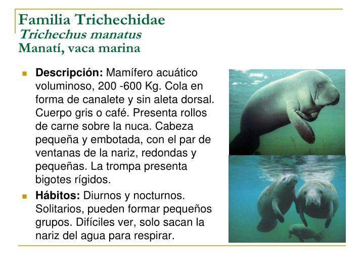 Familia Trichechidae