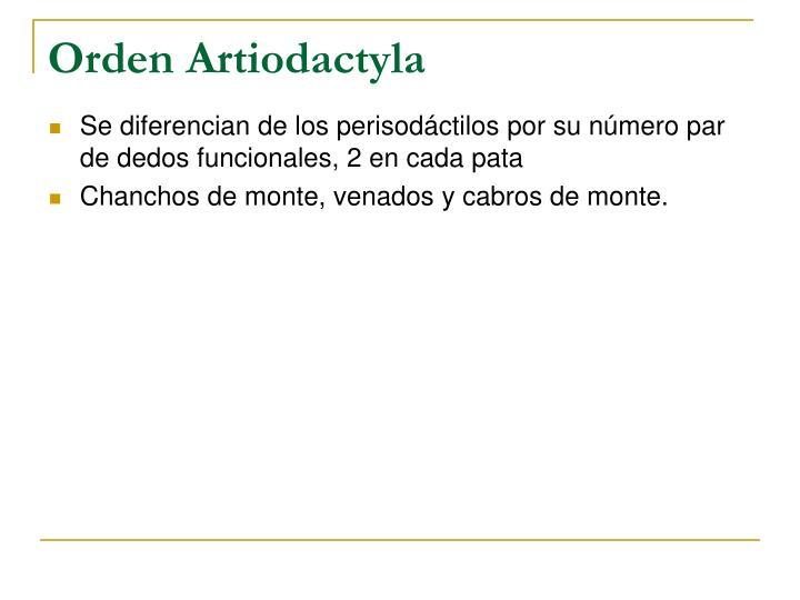 Orden Artiodactyla