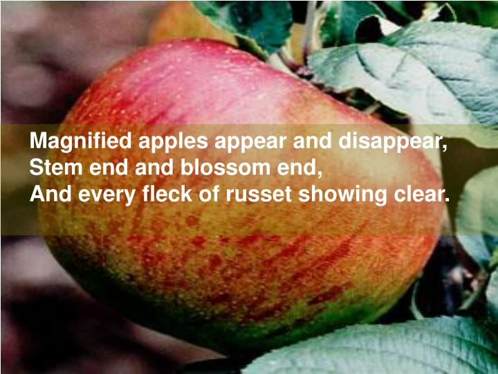 Magnified apples appear and disappear,