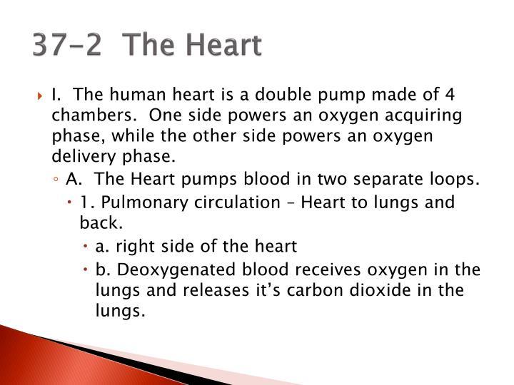 37-2  The Heart