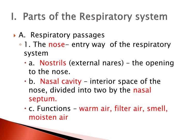 I.  Parts of the Respiratory system