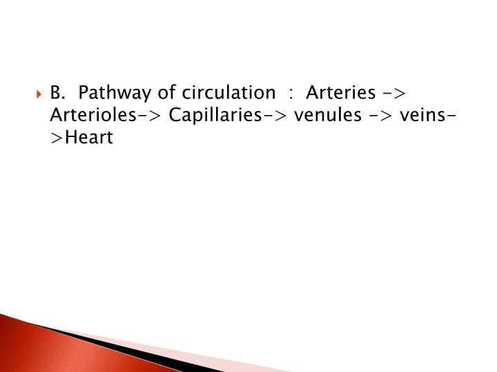 B.  Pathway of circulation  :  Arteries -> Arterioles-> Capillaries-> venules -> veins->Heart