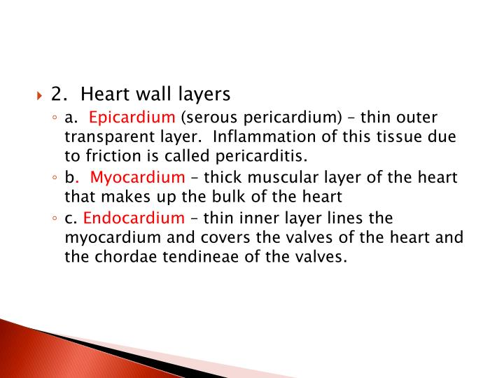 2.  Heart wall layers