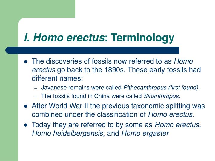 I. Homo erectus