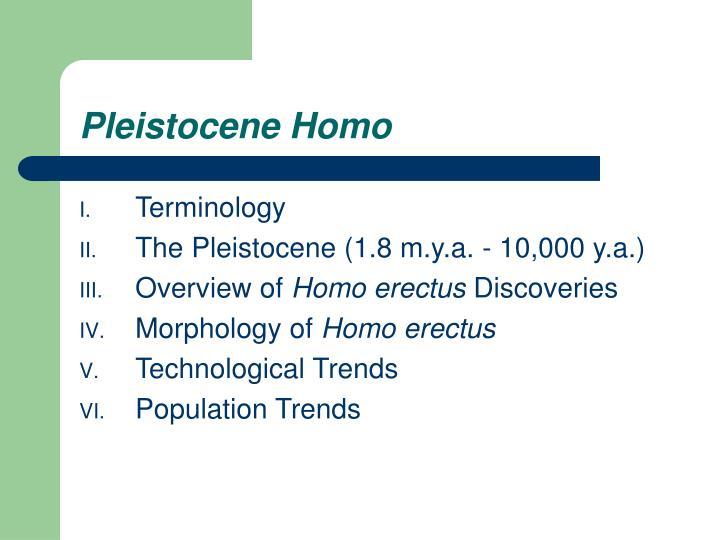Pleistocene Homo