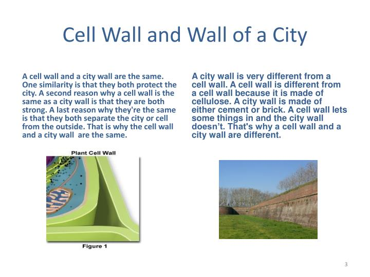 Cell wall and wall of a city