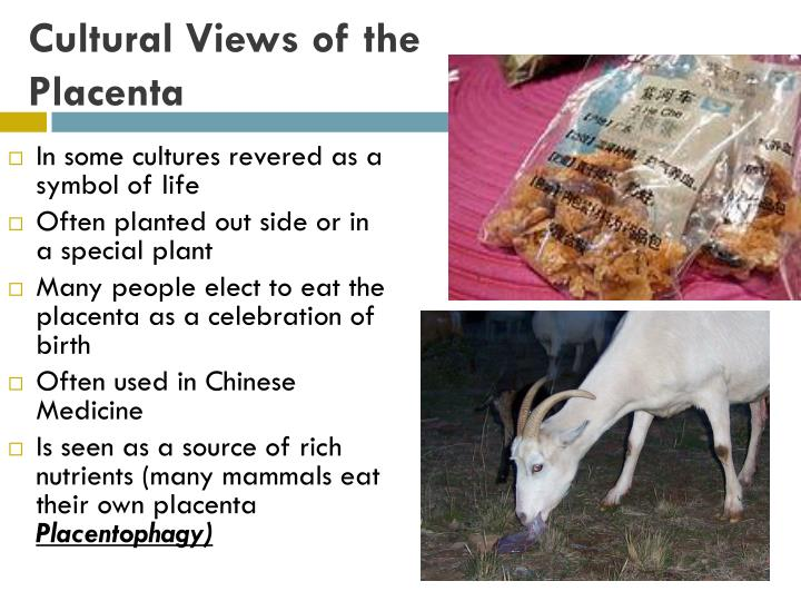 Cultural Views of the Placenta