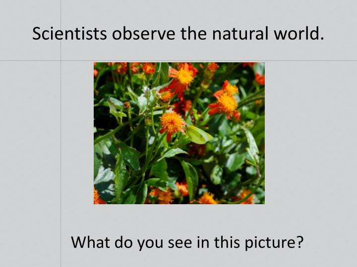 Scientists observe the natural world.