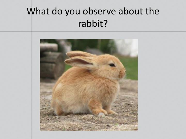 What do you observe about the rabbit?